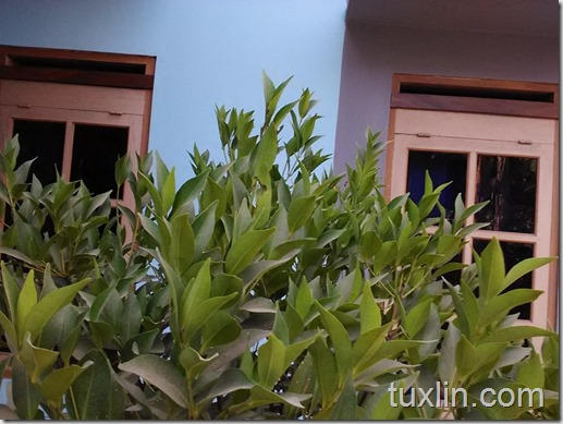 Hasil Foto Kamera Depan Xiaomi Redmi 1S Tuxlin Blog_01