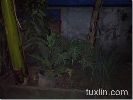 Hasil Foto Kamera Xiaomi Redmi 1S Tuxlin Blog_09
