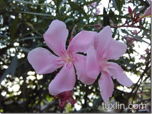 Hasil Foto Kamera Xiaomi Redmi 1S Tuxlin Blog_15
