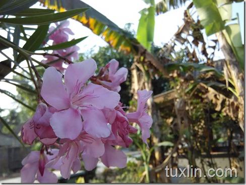 Hasil Foto Kamera Xiaomi Redmi 1S Tuxlin Blog_16