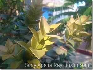 Kamera Xiaomi Redmi 1S vs Sony Xperia Ray Tuxlin Blog_08