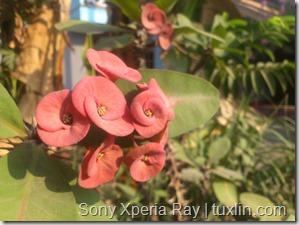 Kamera Xiaomi Redmi 1S vs Sony Xperia Ray Tuxlin Blog_09