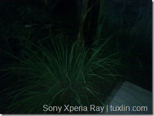 Kamera Xiaomi Redmi 1S vs Sony Xperia Ray Tuxlin Blog_23