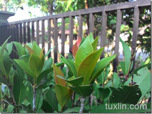 Review Kamera Asus Zenfone 4 Tuxlin Blog_16