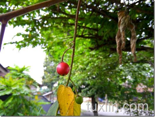 Sampel Foto Kamera Xiaomi Redmi Note 3 Pro