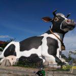 Hasil Foto Kamera Asus Zenfone 3 ZE520KL Siang Hari