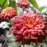 Sampel Foto Kamera Asus Zenfone 3 Max ZC520TL