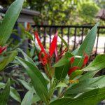 Sampel Foto Kamera Xiaomi Redmi 4A
