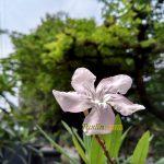 Sampel Foto Kamera Xiaomi Redmi Note 4