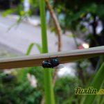 Sampel Foto Kamera Asus Zenfone 3 Max ZC553KL