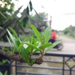 Sampel Foto Kamera Xiaomi Mi5 32GB