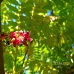 Sampel Foto Kamera Asus Zenfone Zoom S ZE553KL